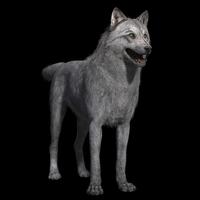 Grey Wolf Maya Rig 0.0.2 for Maya