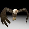 18 50 12 498 buzzard4kpic2 4