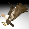 18 50 14 84 buzzard4kpic4 4