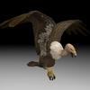 18 50 14 925 buzzard4kpic1 4