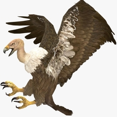Vulture Animated 3D Model
