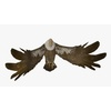 18 51 01 166 buzzardblendpic1 4