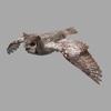 15 59 20 119 gho flyloop 01a 3 rgb0045 4