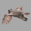 15 59 21 959 gho flyloop 01a 3 rgb0050 4