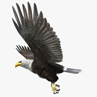 American Bald Eagle - rigged - animated 3D Model