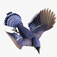 Blue Jay  - rigged - animated 3D Model