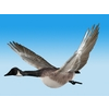 18 40 01 557 cgoose fly 01 4