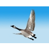 19 27 13 116 cgoose fly 04 4