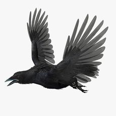 CROW - rigged - animated 3D Model