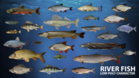 River fish Low-poly 3D Model