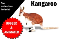 Kangaroo Rigged and Animated 3D Model