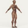 19 22 09 954 realistic alien 04 10 4