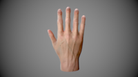 Realistic Human hand for game 3D Model