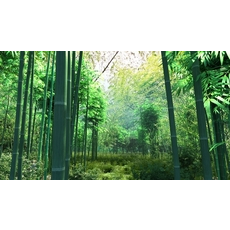 Bamboo forest 03 3D Model