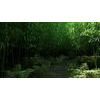 11 44 01 488 bamboo forest 04 1 4