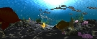 Underwater world of coral and aquatic plants animated 001 3D Model