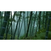 12 39 48 748 bamboo forest animated 01 1 4