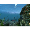 12 54 40 706 underwater world of coral and aquatic plants animated 003 2 4