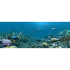 13 51 53 115 underwater world of coral and aquatic plants animated 006 3 4