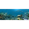 13 51 53 221 underwater world of coral and aquatic plants animated 006 1 4