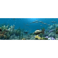 Underwater world of coral and aquatic plants animated 006 3D Model