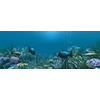13 51 53 240 underwater world of coral and aquatic plants animated 006 2 4