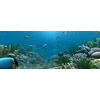 13 51 53 355 underwater world of coral and aquatic plants animated 006 4 4