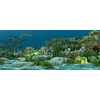 14 08 18 276 underwater world of coral and aquatic plants animated 007 2 4