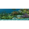 14 08 18 458 underwater world of coral and aquatic plants animated 007 1 4
