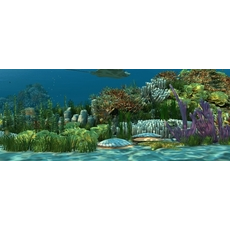 Underwater world of coral and aquatic plants animated 007 3D Model