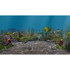 14 17 25 153 underwater world of coral and aquatic plants animated 008 1 4