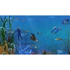 14 35 59 377 underwater world of coral and aquatic plants animated 010 1 4