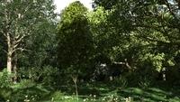Forest Scene 18 3D Model