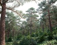 Forest Scene 20 3D Model