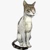08 27 41 21 cat4kdisplaypic1 4