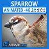11 50 06 276 sparrow thumb 4