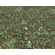 Forest Terrain Pack 24