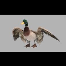 Bird Rig 3D Model