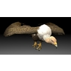 01 08 30 839 vulture4k2k5 4