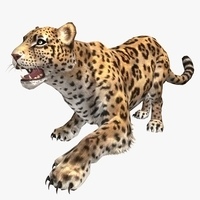 Leopard Animated 3D Model