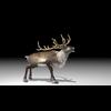 20 55 02 435 reindeer4k2k3 4