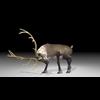 20 55 04 237 reindeer4k2k5 4