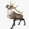 20 56 13 789 reindeer4k2kdisplaypic 4