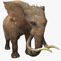 Elephant Animated 3D Model