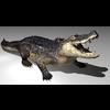 18 23 24 945 alligator k2kpic1 4