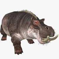 Hippopotamus Animated 3D Model