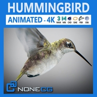 Hummingbird Animated 3D Model