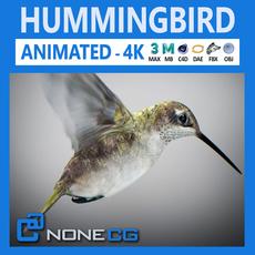 Hummingbird Animated 3D Model