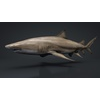 06 08 43 648 car studio lemon shark v10 1 0002 4