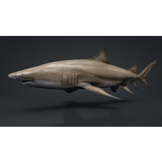 Lemon Shark Rigged C4D 3D Model